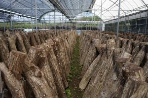 有機JAS規格改定、きのこ栽培に関わるポイントまとめ。きのこで有機JAS認証取得への道【第5話】