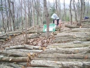 ③原木椎茸栽培で有機JAS認証を目指すなら種駒は要検討|有機ときのこ【第10話】