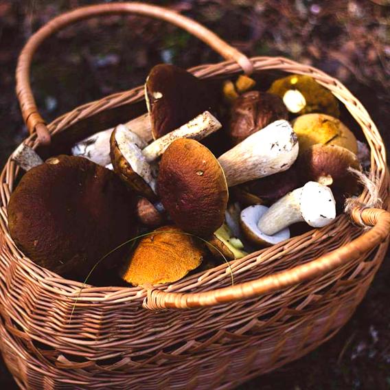 ④乾燥ポルチーニ(ポーランド産)|きのこ営業マンの今月のピックアップ!